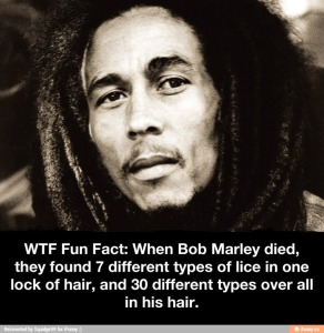 bob marley dreadlocks